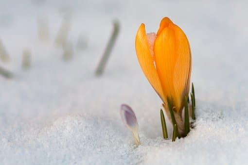 Frühling/Winter